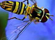 Hornets for sex