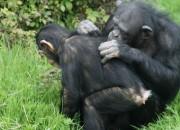 social grooming in primates